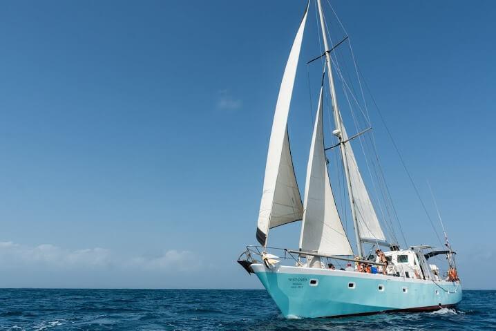 sailboat-wild-card-13